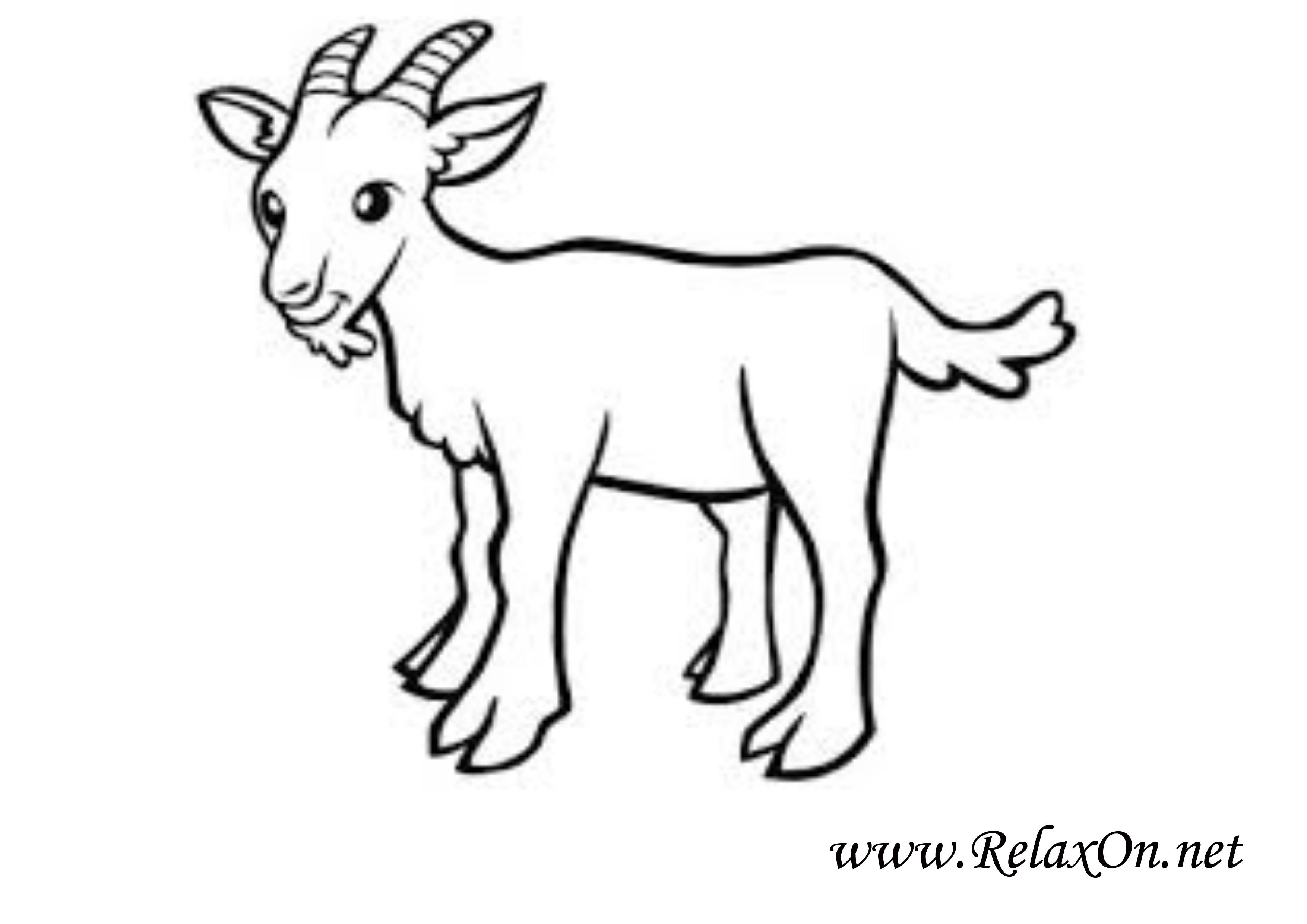 Коза 13