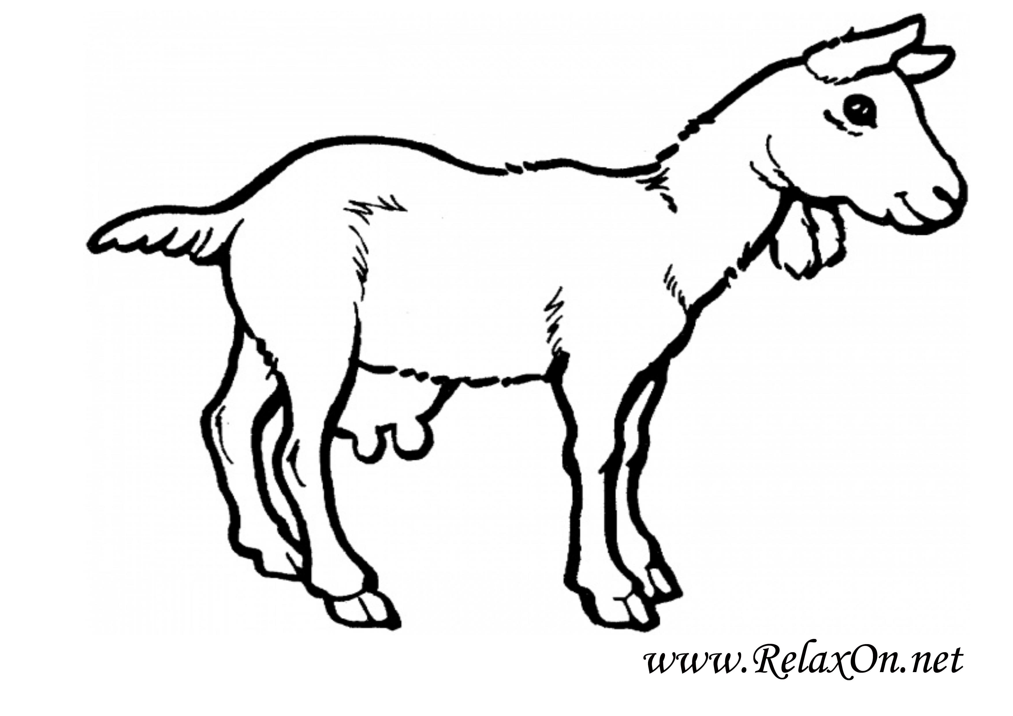 Коза 8