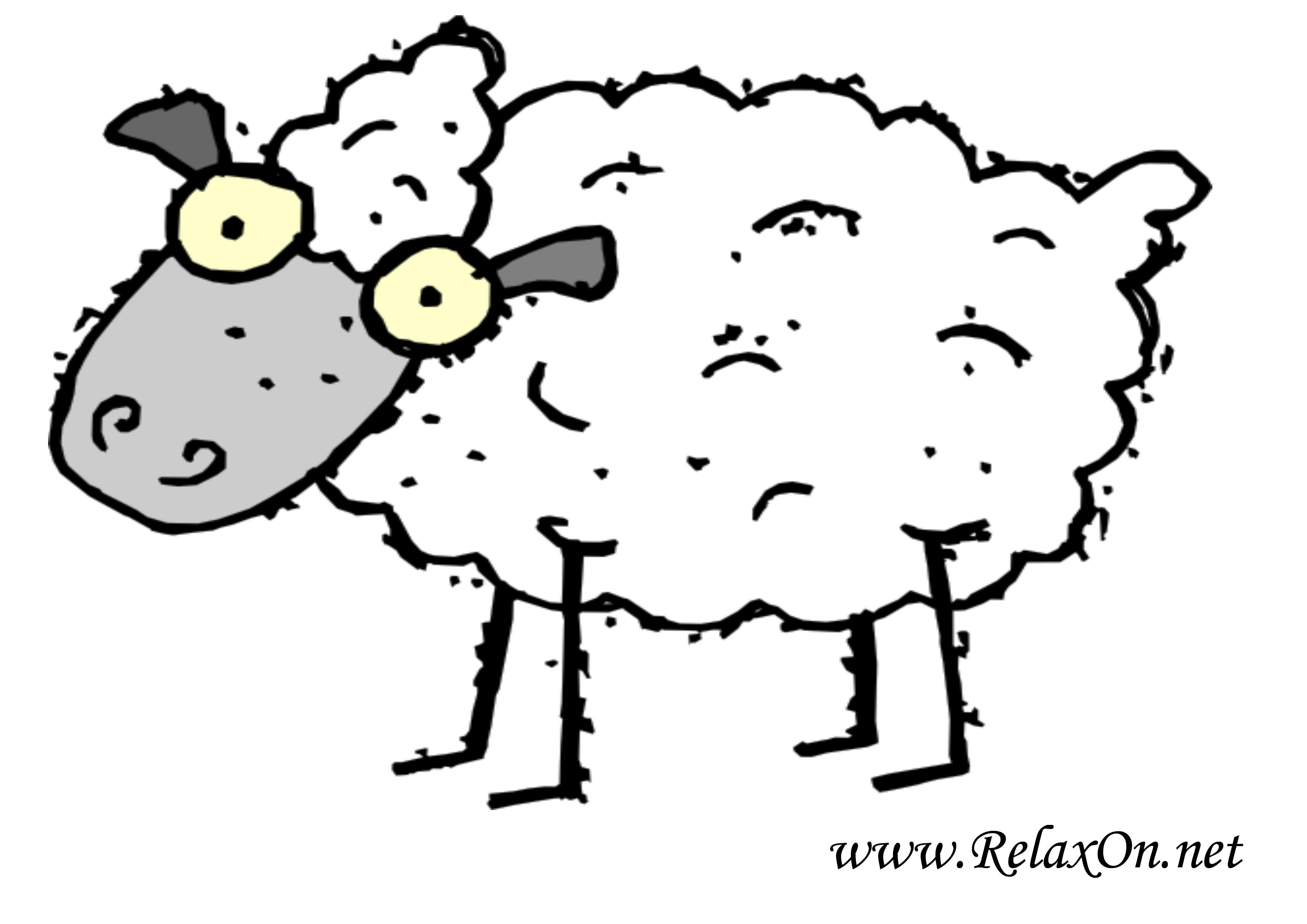 Овца 5