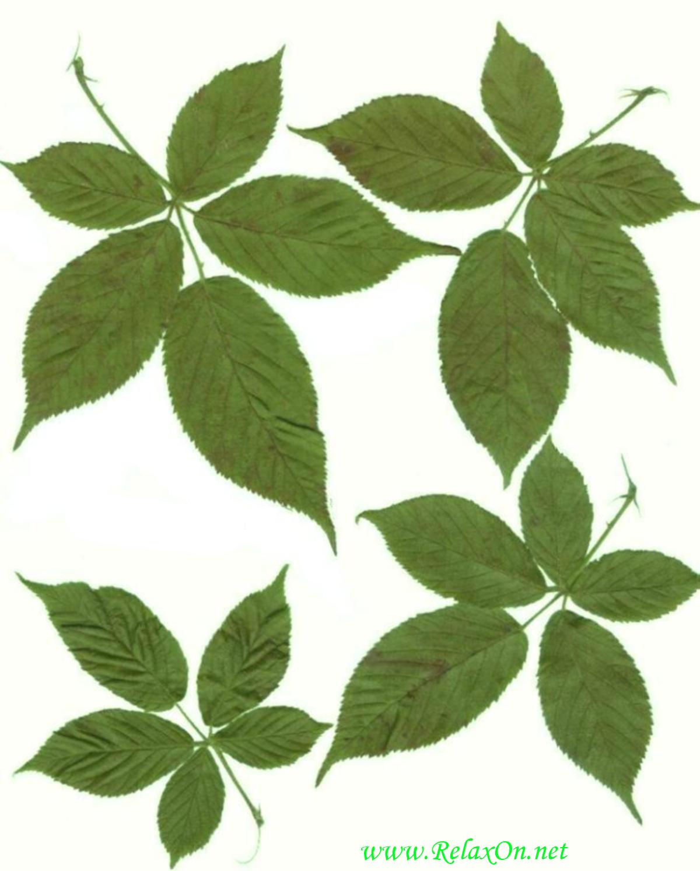 Трафарет листьев-3