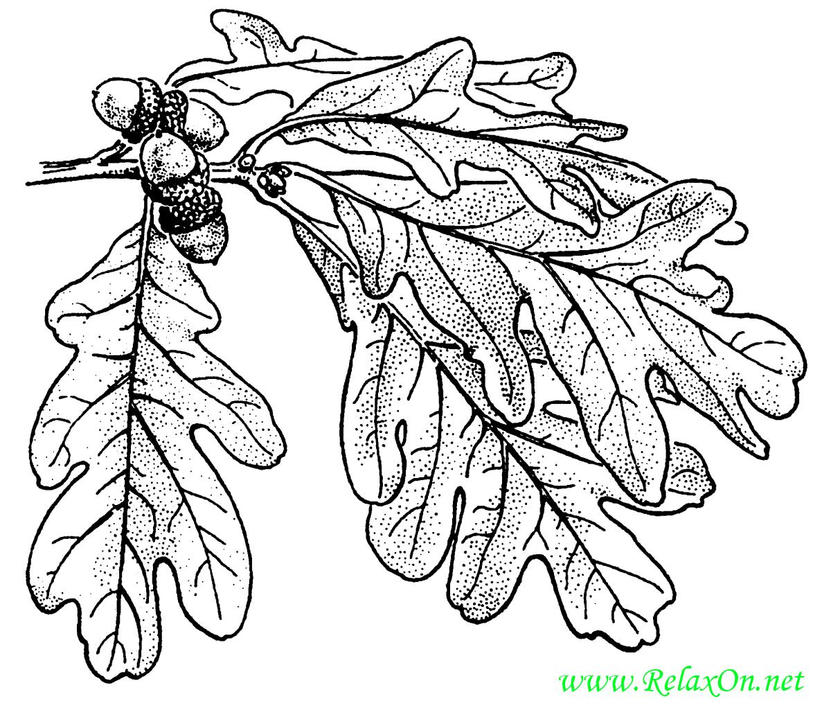 Трафарет листьев дуба-1